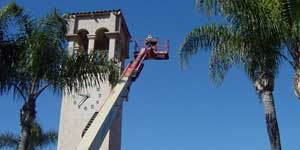 Bee Removal Torrance CA Difficult bee removal using a 