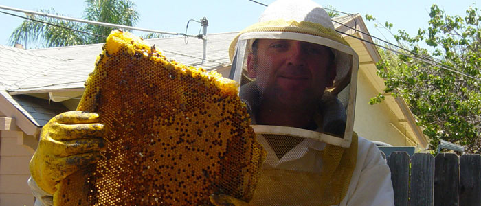 Torrance Bee Removal Guys Tech Michael