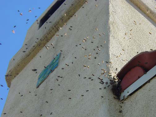 Bee Removal Torrance This is 